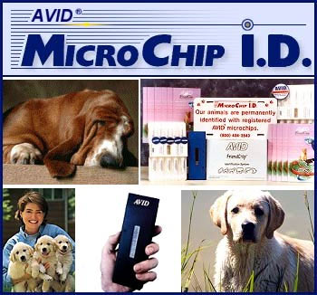 Avid MicroChip ID For Your Dog