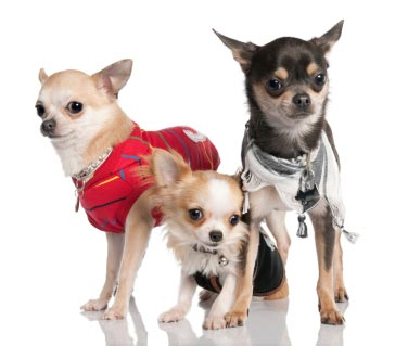 Dog fashion woofilicious - Dog clothes for chihuahuas ...